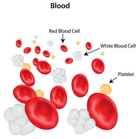 labelled: Blood Labeled Diagram Illustration