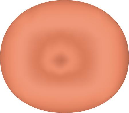vaginal: Cervix