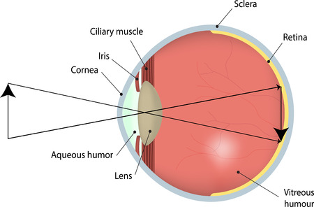 opthalmology: Vision Illustration