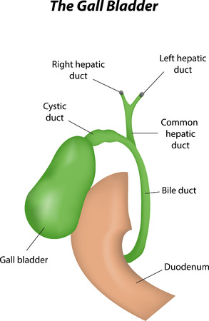 hepatic: Gall Bladder Labeled Diagram