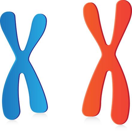 meiosis: Chromosomes