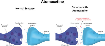 norepinephrine: Atomoxetine Stock Photo