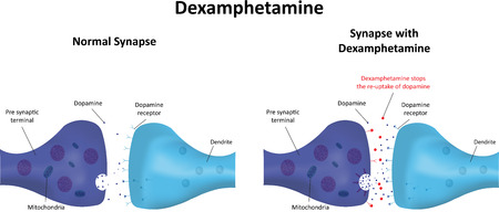 synaptic: Dexamphetamine