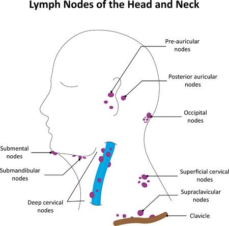 ラベル頭頸部のリンパ節