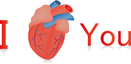 ventricle: I coraz�n usted anat�mico Vectores