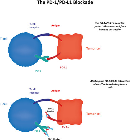 in differentiation: The PD1PDL1 Blockade