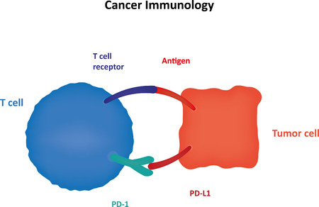 t cell: Cancer Immunology