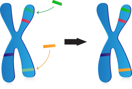 gene on a chromosome: Gene Therapy