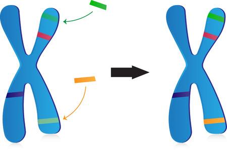 Terapia genowa Ilustracje wektorowe