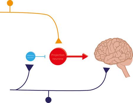 sensory receptor: Pain Gate Theory