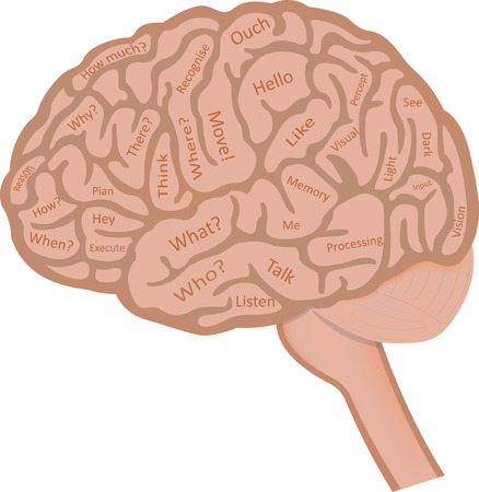 frontal lobe: Brain Words Concept Illustration Stock Photo