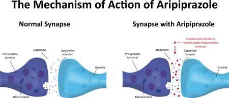 dendrite: Aripiprazole Action Illustration
