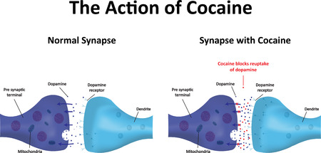 receptor: Cocaine Illustration