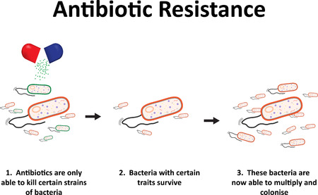 resistant: Antibiotic Resistance
