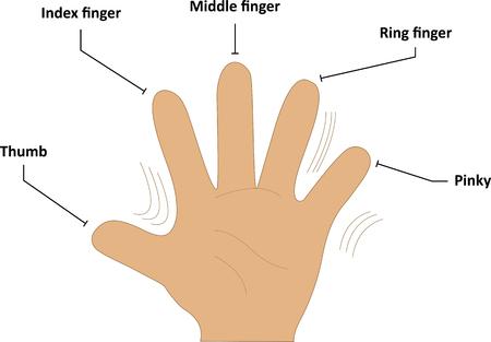 dedo me�ique: Nombres de los dedos