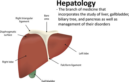 hepatic: Hepatology Definition