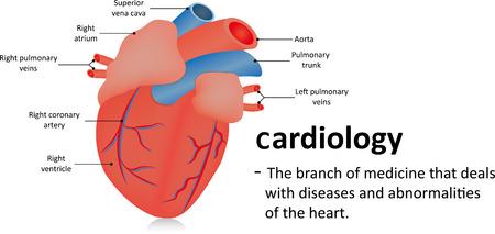 angina: Cardiology Definition