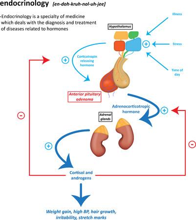 endocrinology: Endocrinology Definition