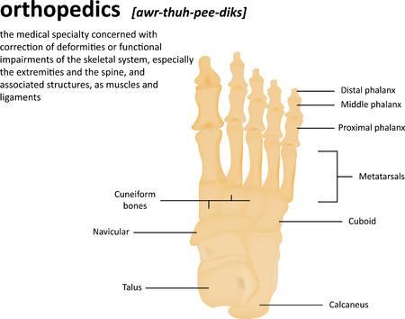orthopaedics: Ortopedia Definici�n Foto de archivo