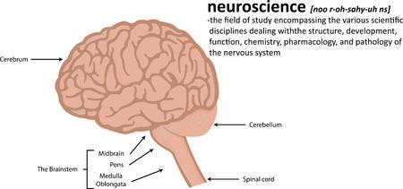 definicion: Neurociencia Definición Vectores
