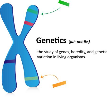 genetica: definire Genetica