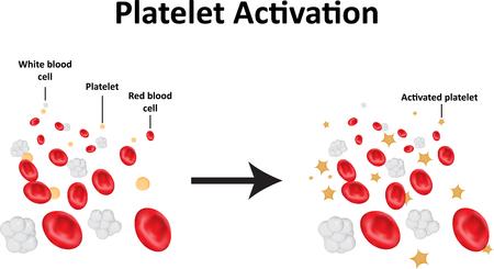 platelet: Platelet Activation