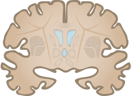 コロナ脳スライス