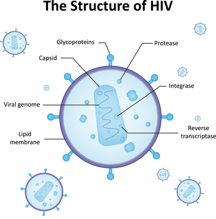 hiv aids: The Structure of HIV Illustration