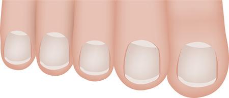 dedo meÑique: Ilustración dedos de los pies