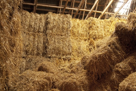 This is  hay bundles stack inside of a farm. photo