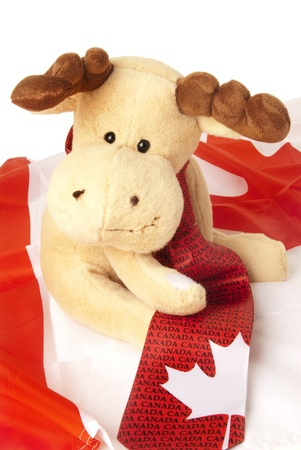 This is a moose seatin over a canadian flag and wearing a canadian tie. photo