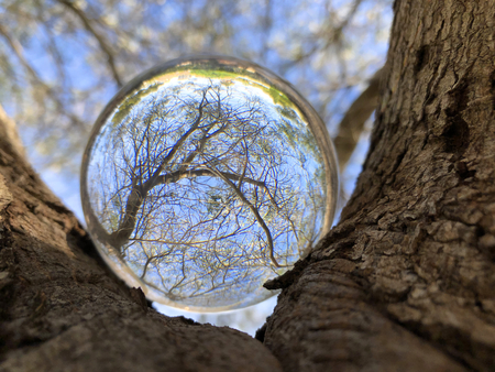 Looking through a crystal ball balanced in a tree. Creative refraction photography