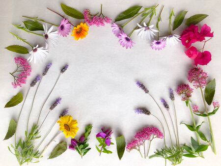Floral frame made with freshly picked garden flowers including lavender, osteospermum, valerian, bougainvillea, gazanias and bay leaves, isolated on a plain background with copy space