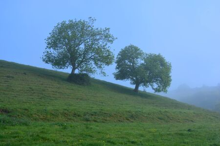 English spring landscape with two  Ash trees on the hill in early morning mist, Dorset, England Stock Photo