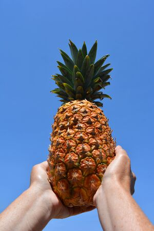 Woman holding a perfect ripe pineapple against blue summer sky