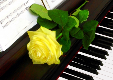 the yellow rose lies on keyboard Stock Photo