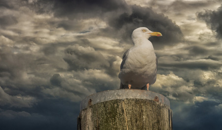 baptize: Seagull sitting on a background of beautiful sky