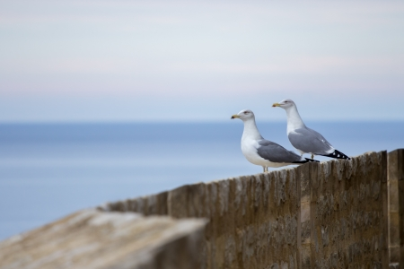 Two seagulls sitting on a wall while looking at the sea Stock Photo - 16245958