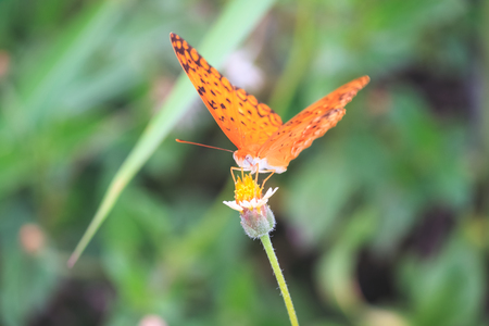 io: the butterfly Stock Photo