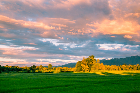 northern light: Beautiful sunset and dark clouds on rice fields with trees and big mountain background in Phrae Thailand.