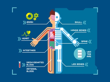 Human Body Anatomy Infographic Design on Blue Background concept flat vector illustration.