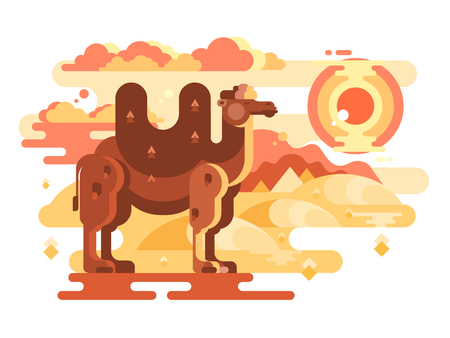 Two-humped camel in desert