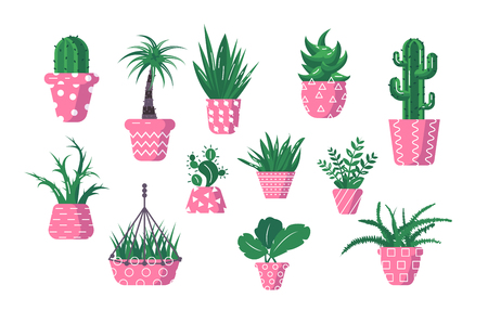 Set of domestic green plants vector illustration. Different types of various kinds of home herbs cactus palm tree fern in flowerpot flat style design. Isolated on white Stock Vector - 123522740