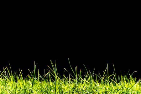 Green grass close-up isolated on black background