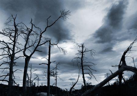 lluvia acida: �rboles muertos y las nubes de tormenta
