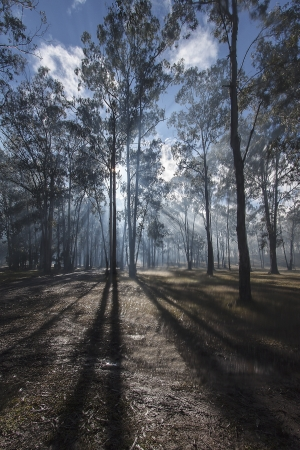 Sun shining through early morning mist in a forest Stock Photo - 18342910