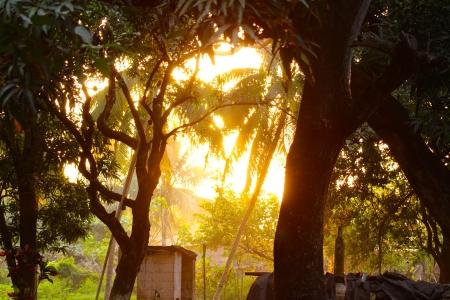 tropical tree: Puesta del sol tropical tropical