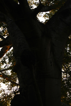 tropical tree: �rbol tropical