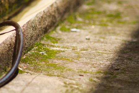 texture: Moss texture