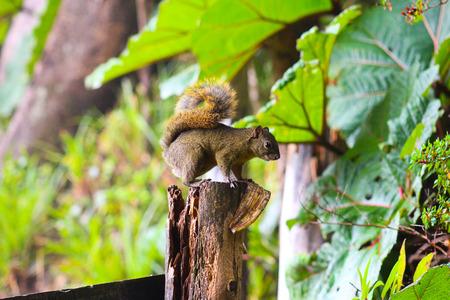 ardilla: Chipmunk en un tronco